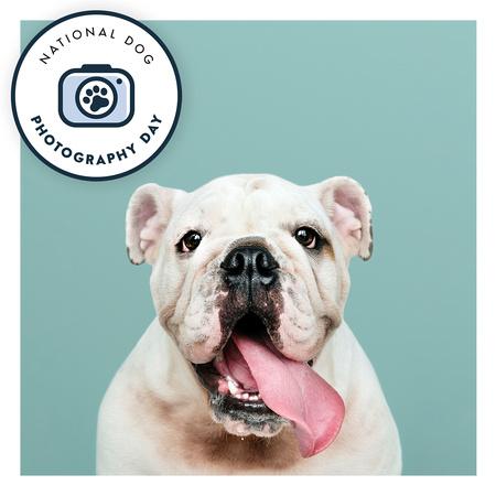 National Dog Photography Day